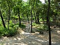 西沽公园小树林 - panoramio.jpg