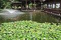 贵州 黄果树 荷塘渔池 - panoramio.jpg