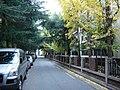 가든하이츠 은행나무 - panoramio.jpg