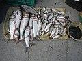 06586jfCandaba, Pampanga Market Fishes Foods Landmarksfvf 02.jpg