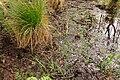 15-05-09-Biosphärenreservat-Schorfheide-Chorin-Totalreservat-Plagefenn-DSCF5547-RalfR.jpg