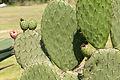 15-07-13-Teotihuacán-RalfR-N3S 9201.jpg