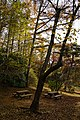 171125 Kobe Municipal Forest Botanical Garden12s3.jpg