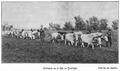 1910 Arătură cu 6 boi.PNG