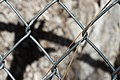 2013-365-50 To Be Unfenced (8490639521).jpg