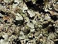 2014-01-06 13-03-32 lichen-17f.jpg