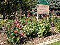 2014-09-21 14 48 18 Roses in the Kelly Ostler Horizon Hospice Memorial Rose Garden in the main city park of Elko, Nevada.JPG