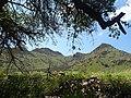 2014-365-238 Rest Spot Under an Oak (15044720211).jpg
