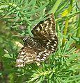 2016 05 28 Schmetterling2.jpg