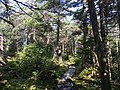2017-09-11 12 26 01 View north along the Long Trail between the Forehead and the Chin of Mount Mansfield within Mount Mansfield State Forest in Stowe, Lamoille County, Vermont.jpg