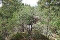 20210518. Sächsische Schweiz.Rauenstein.-065.jpg