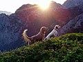 222-BKimi Igo MonteCroce Sole 020.jpg