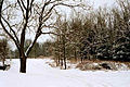 5150 Delta River Drive - Back yard woods.JPG