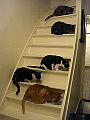 5 katten.jpg