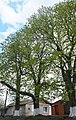 68-247-5016 Каштанова алея.jpg