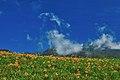 983, Taiwan, 花蓮縣富里鄉新興村 - panoramio (3).jpg