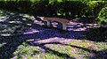 ALFOMBRA JACARANDUZA - panoramio.jpg