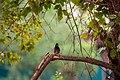 A Bird in Wilpattu National Park 03.jpg