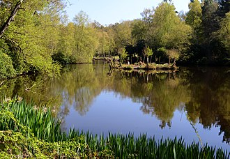 River Ock, Surrey - A Spring view of Sweetwater Pond Witley
