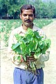 A man showing the 'Jatropa' plant used in producing Bio-Diesel at Rashtrapati Bhawan in New Delhi on March 14, 2005.jpg