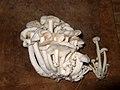 A small but tasty harvest (10843427516).jpg