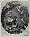 A stag, a buck and a hind before a huge rock in the forest. Wellcome V0021140.jpg