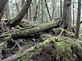 Abandoned canoe (26923604084).jpg