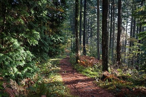 Abbeyford Woods, Devon - panoramio (1)