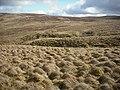 Above Little Aira Beck - geograph.org.uk - 1775466.jpg