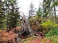 Acadia National Park (8111148077).jpg