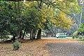 Acharya Jagadish Chandra Bose Indian Botanic Garden - Howrah 2011-02-20 1571.JPG