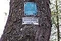 Aesculus octandra bark.jpg