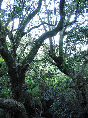 Helderberg Nature Reserve - Image: Afrotemperate forest at Helderberg Nature Reserve Afromontane Cape Town