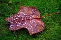 After the rain - Flickr - Stiller Beobachter.jpg