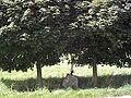 Aitrach Mooshausen Feldkreuz.jpg