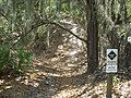 Alafia River SP path01.JPG