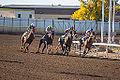 Alberta Breeders' Fall Classic 2014 - Horse Racing (15118109647).jpg