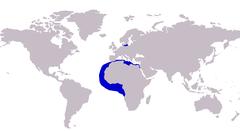 Alectis alexandrinus distribution.PNG
