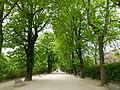 Allée du Jardin des Plantes 2.JPG