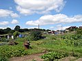 Allotments at Picton Terrace - geograph.org.uk - 1440805.jpg