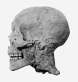 Amenhotep III mummy head profile.png