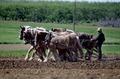 Amish farmer and his team of draft horses, Lancaster, Pennsylvania LCCN2011634220.tif