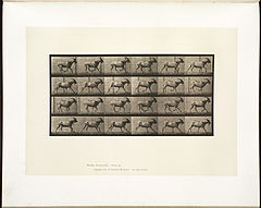 Animal locomotion. Plate 679 (Boston Public Library).jpg