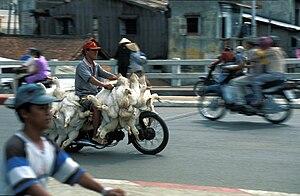 Animal transport as used in Vietnam