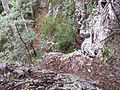 Another speed climb - panoramio.jpg