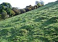 Ant hills, Marleycombe Hill - geograph.org.uk - 1014485.jpg