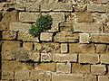Apollonia Walls IMG 8345.JPG