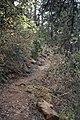 Artemis Nature Trail - panoramio (14).jpg
