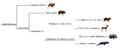 Artiodactyla phylogeny (eng).png