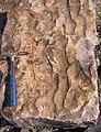 Asymmetrical ripple marks in quartzite (Baraboo Quartzite, upper Paleoproterozoic, ~1.7 Ga; southern shore of Devil's Lake, Devil's Lake State Park, Wisconsin, USA) 7 (18200128404).jpg